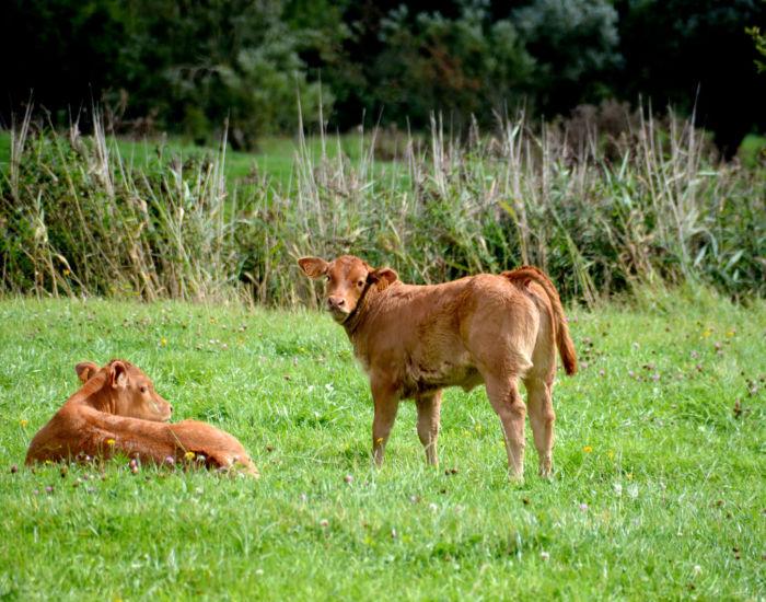 Utah Beef